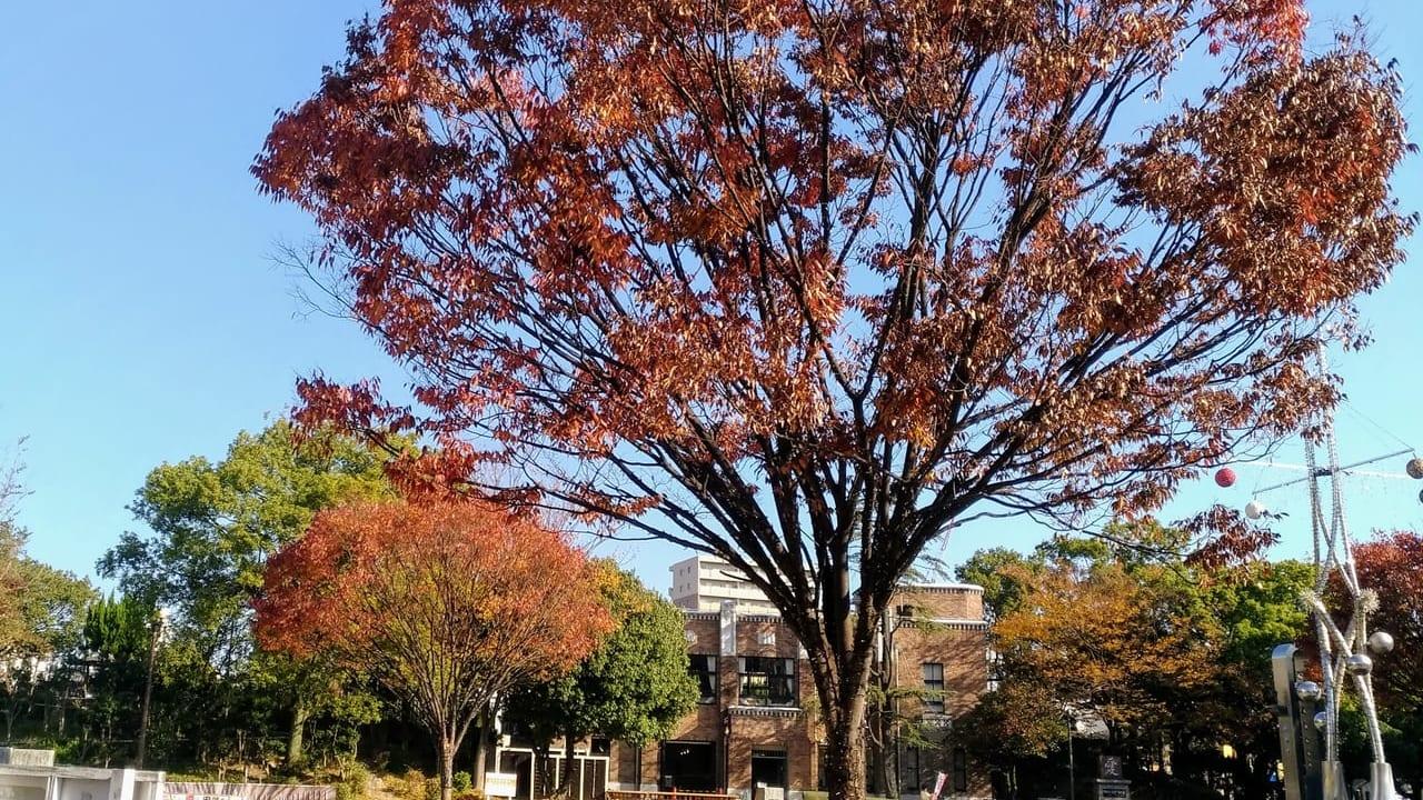 諏訪公園の紅葉